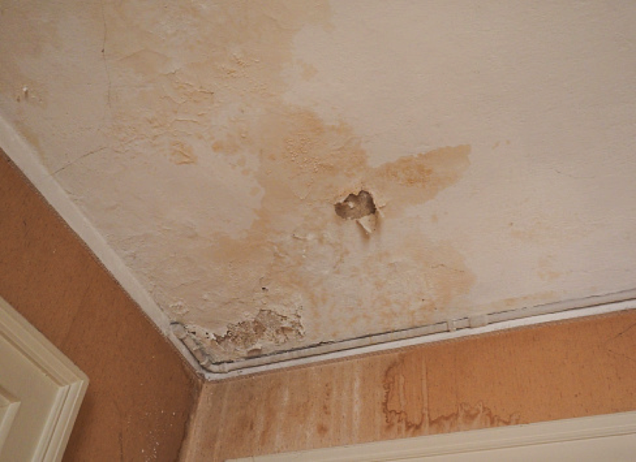 Ceiling mold damage